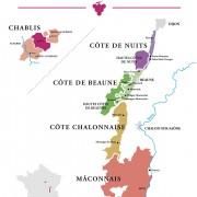 Bourgogne superficie du vignoble grands crus chablis